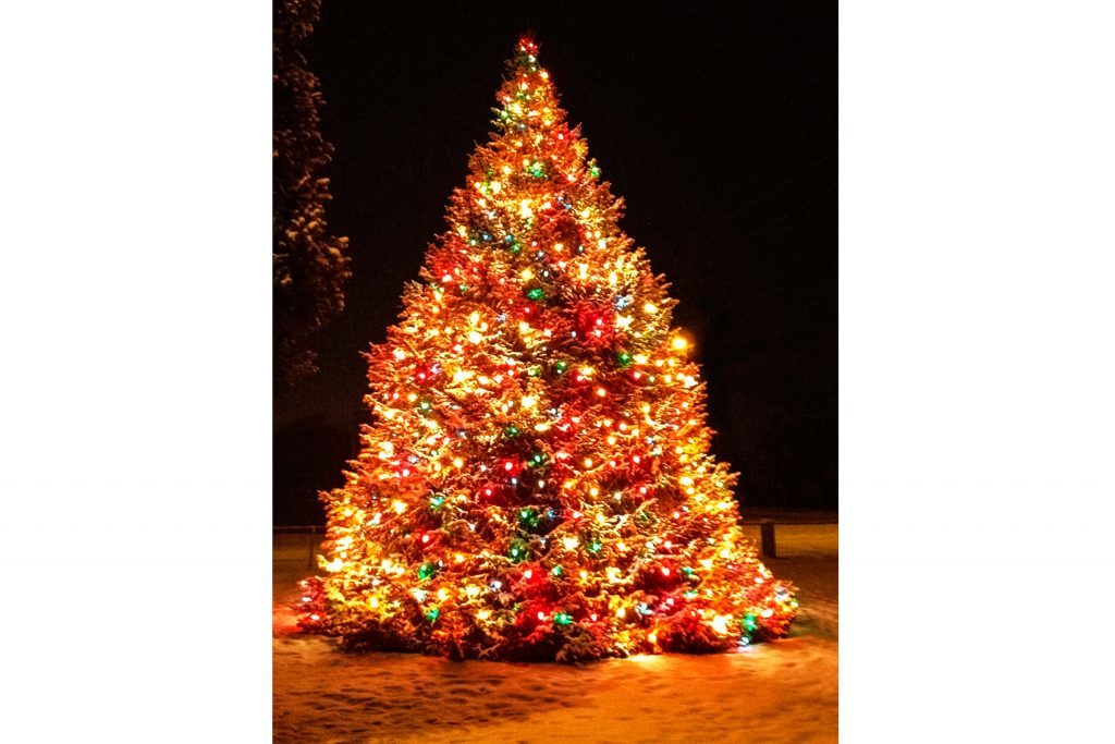 Why this family strings 1 100 lights on a 40 foot tree for How did the christmas tree tradition start