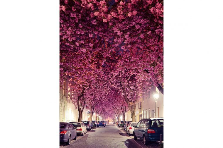 05-these-captivating-Images-of-Amazing-Trees