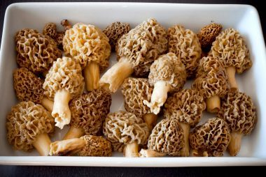 Morel-Mushrooms