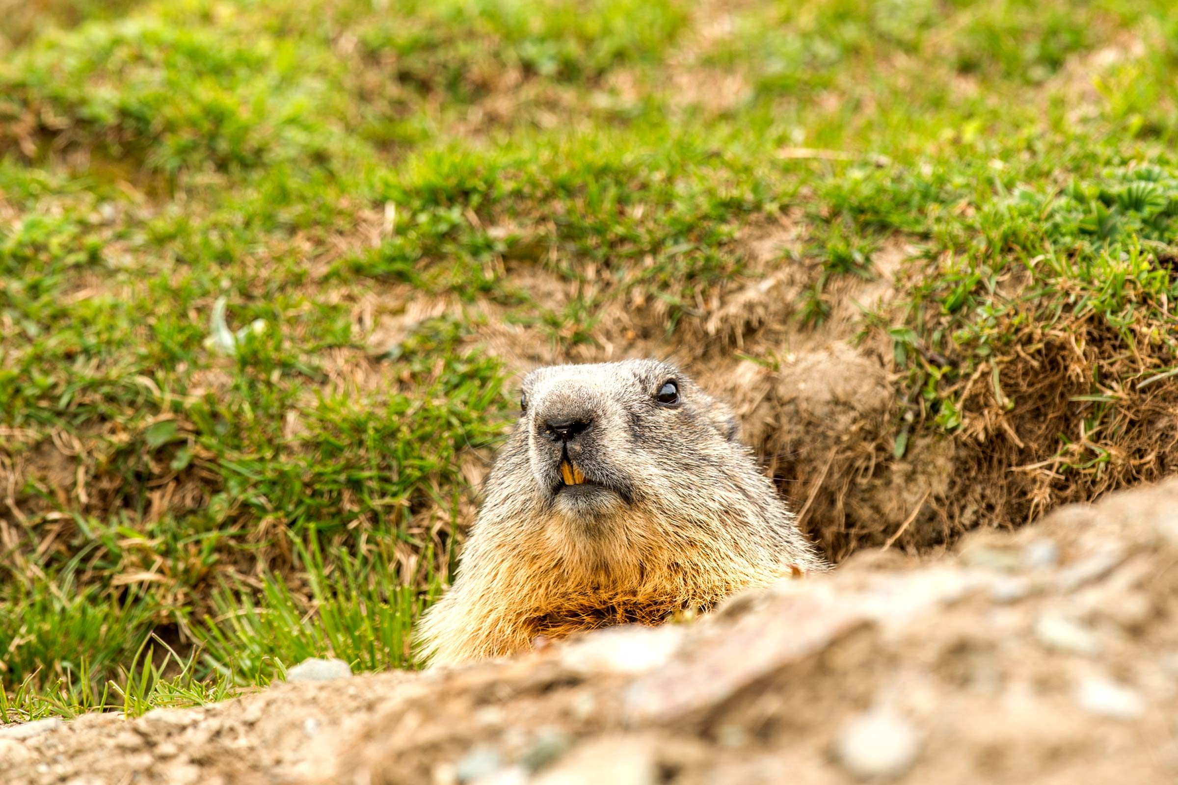 the history of how groundhog day started reader u0027s digest