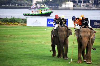 Elephants-play-polo