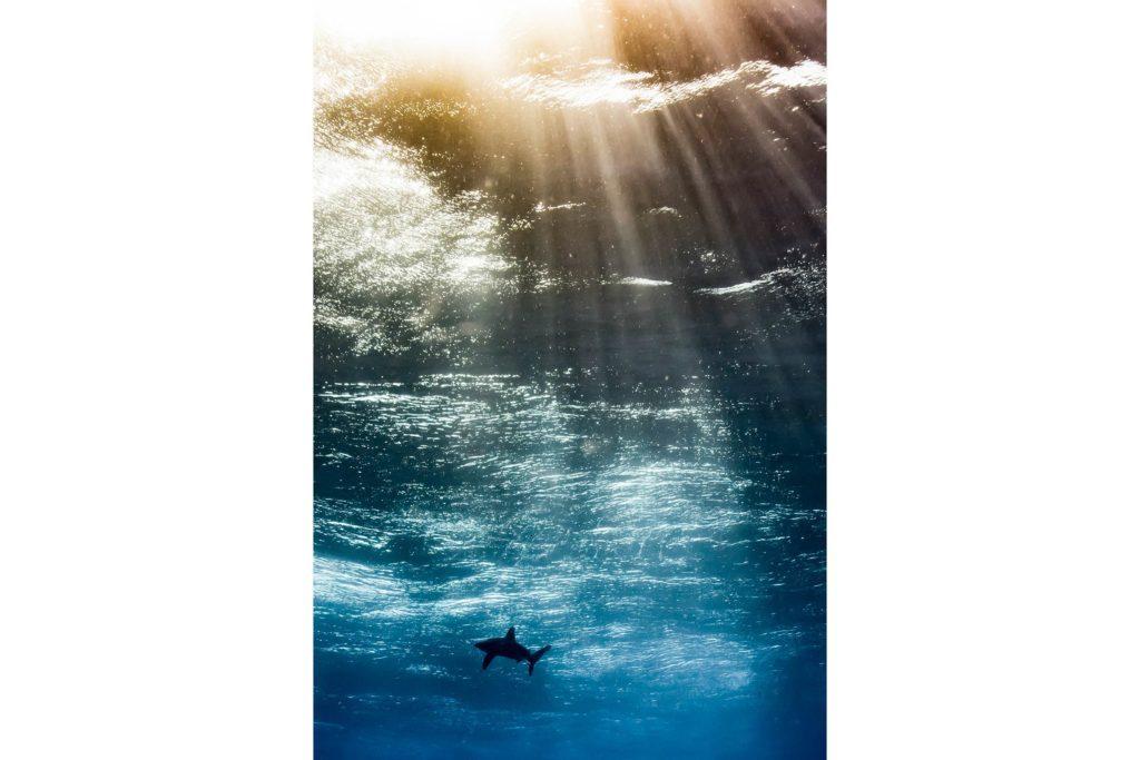 05-Underwater-Photos-You-Will-Not-Believe-Horacio-Martinez