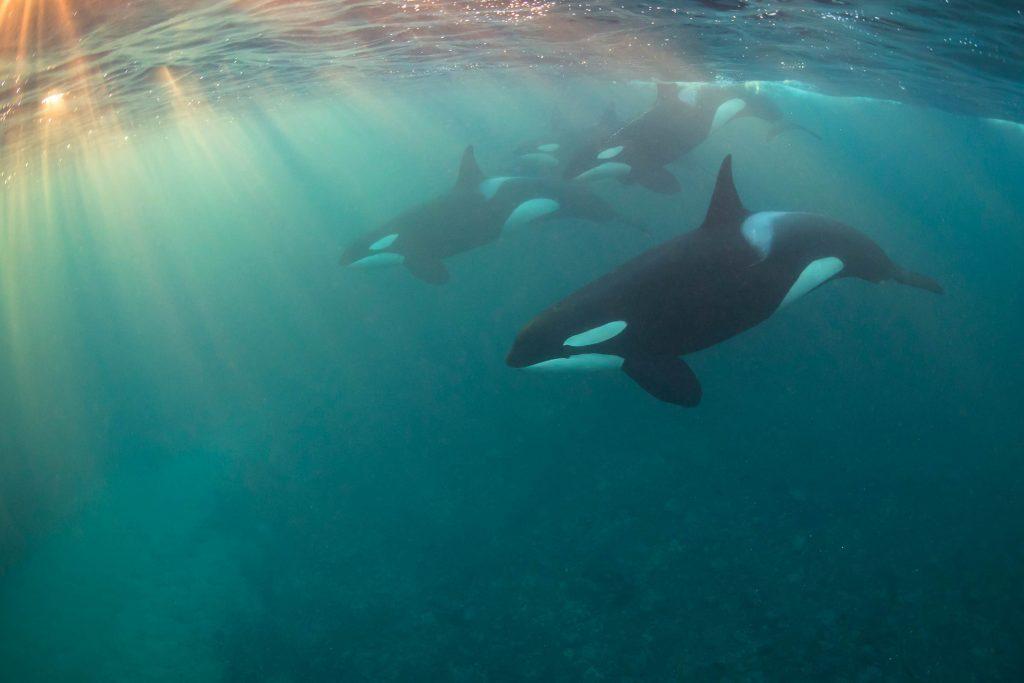 06-Underwater-Photos-You-Will-Not-Believe-Nicholai-Georgiou