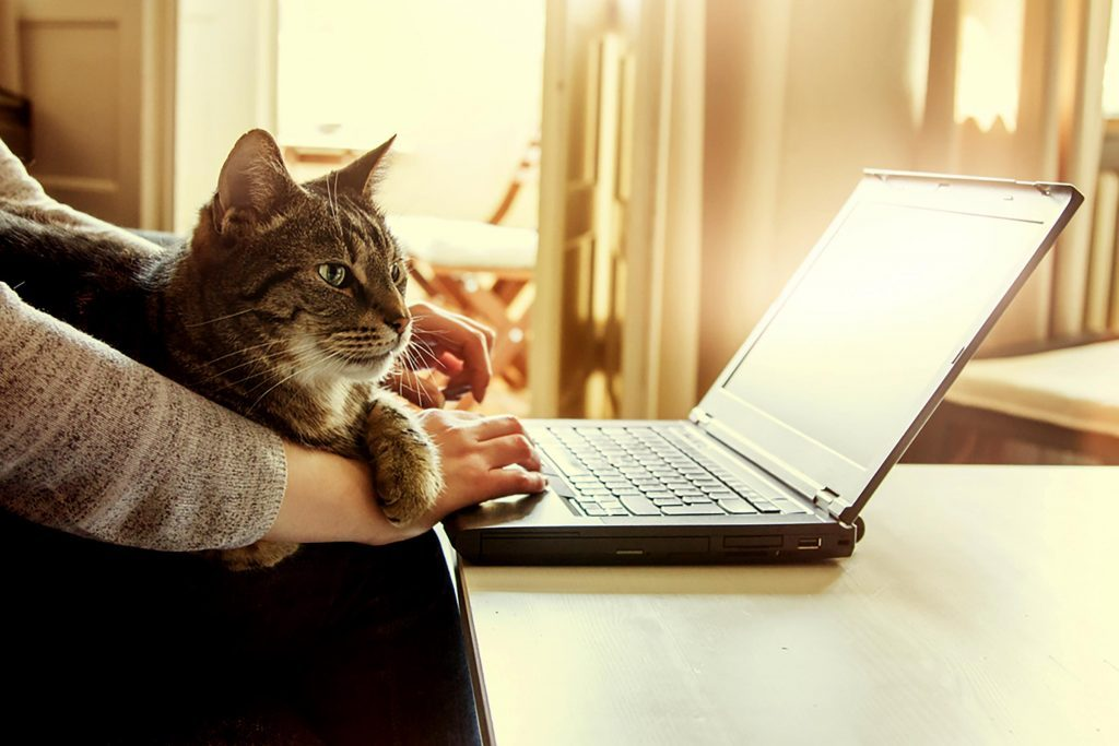 Why Do Cats Like Keyboards?