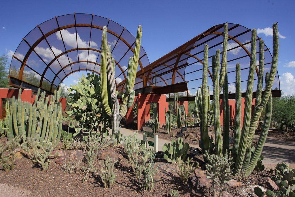 03_Arizone_DesertBotanical_cactus_gallery