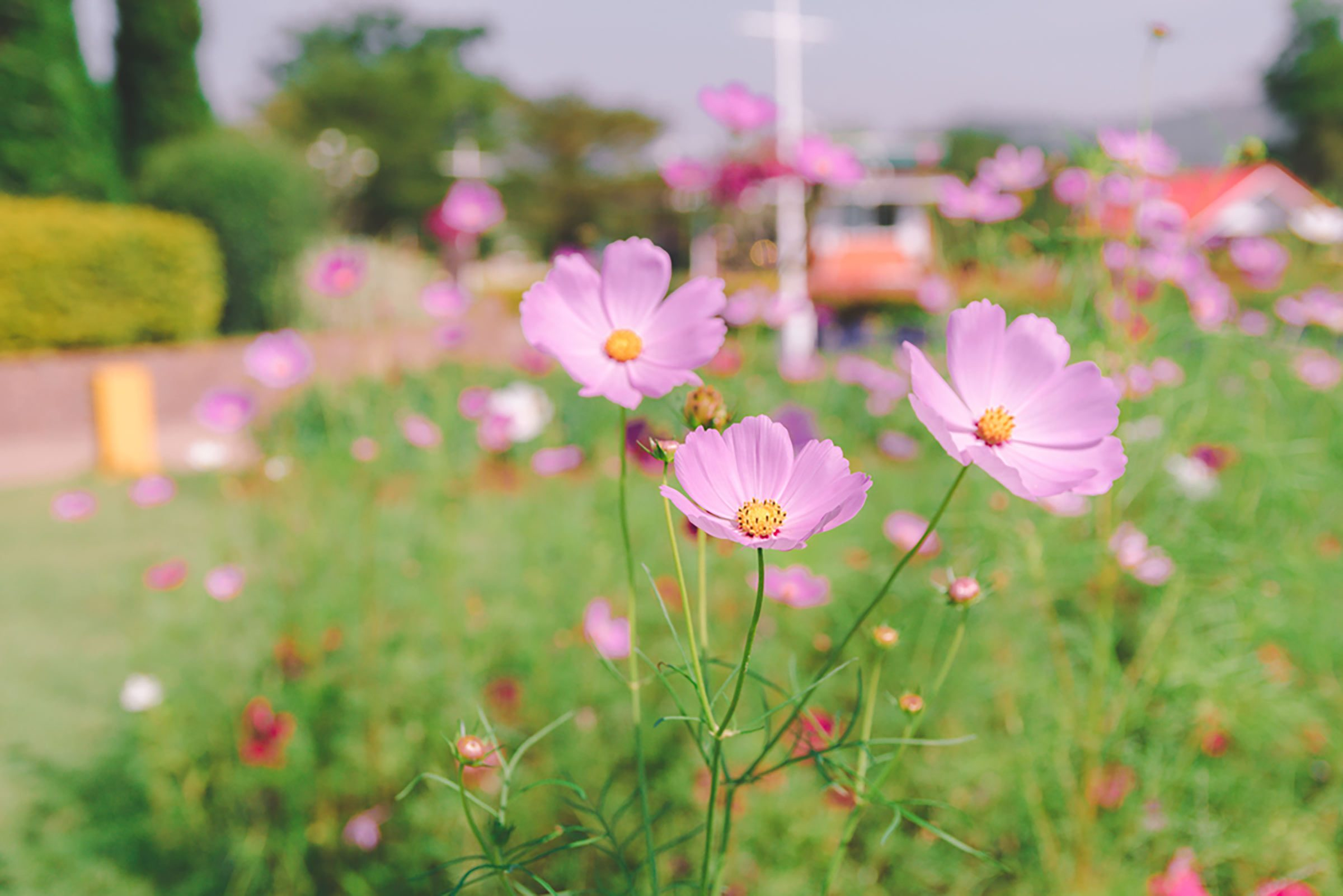 Le pollen et brûlure d'estomac, signes d'allergies