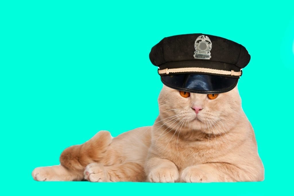03-cats-with-better-jobs-than-you