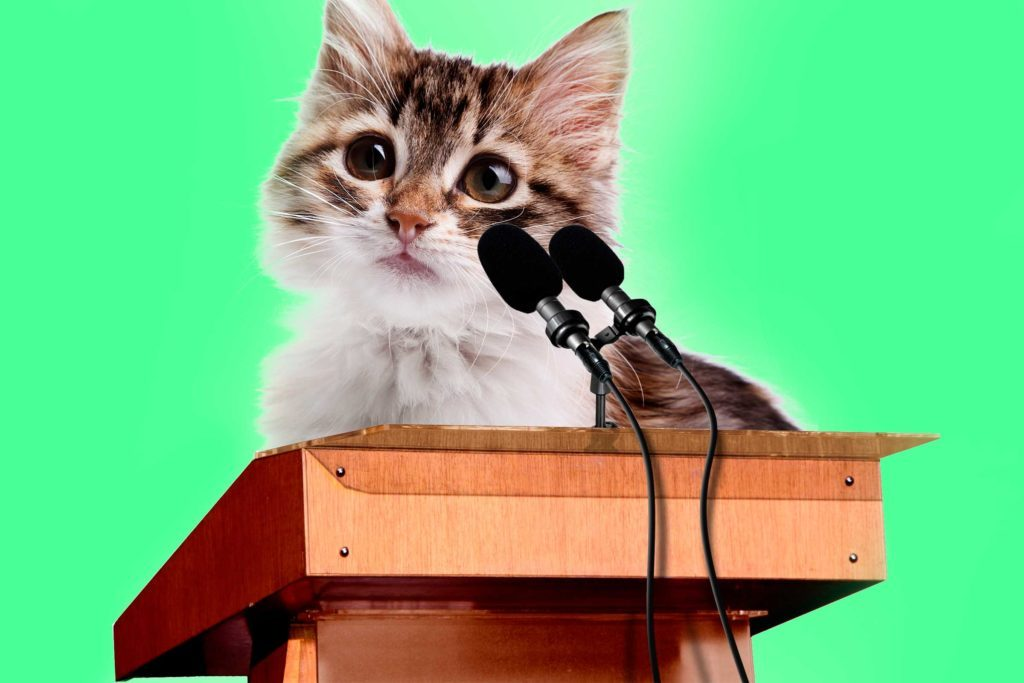 04-cats-with-better-jobs-than-you