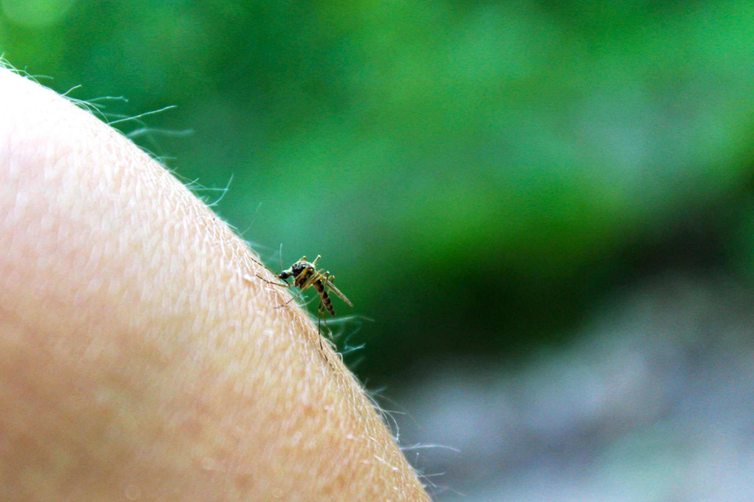 Maladies transmises pas des moustiques: Virus de l'encéphalite équine de l'ouest