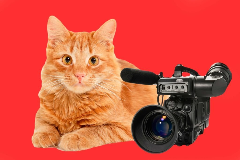 06-cats-with-better-jobs-than-you