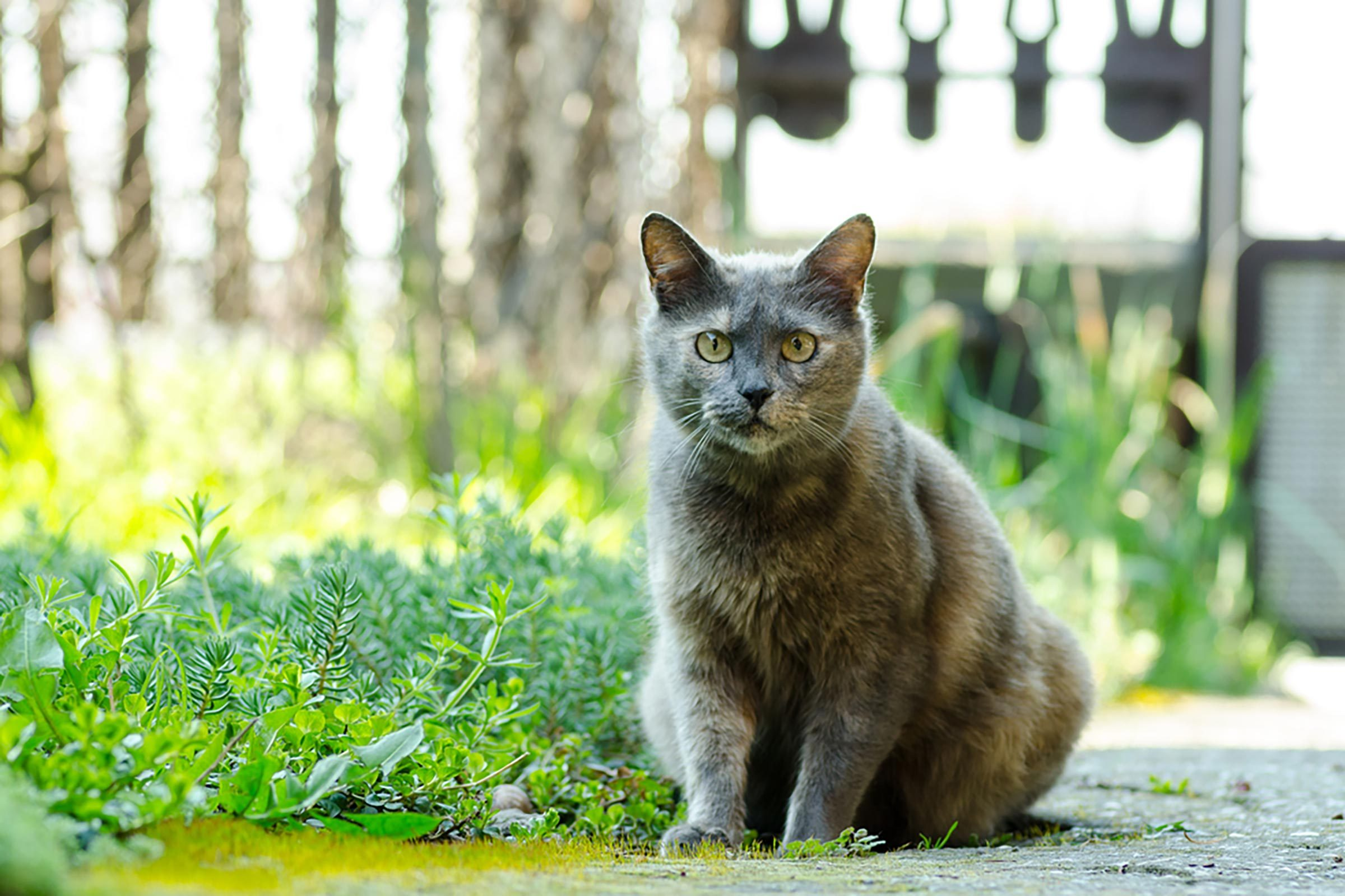 cat cancer signs 11 to look out for reader u0027s digest