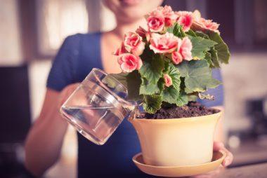 wateringplant