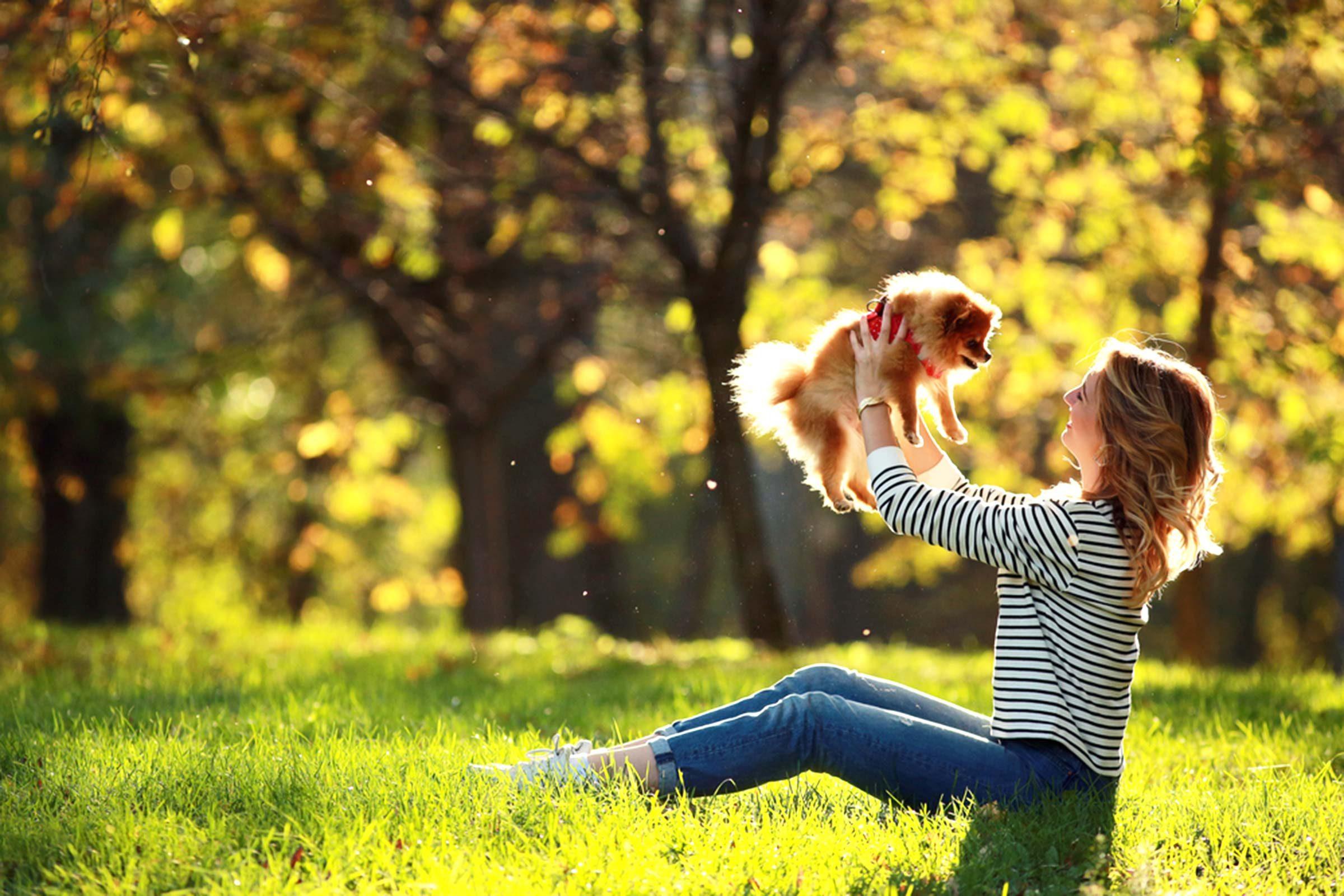 Animalerie: Méfiez-vous des petits chiens