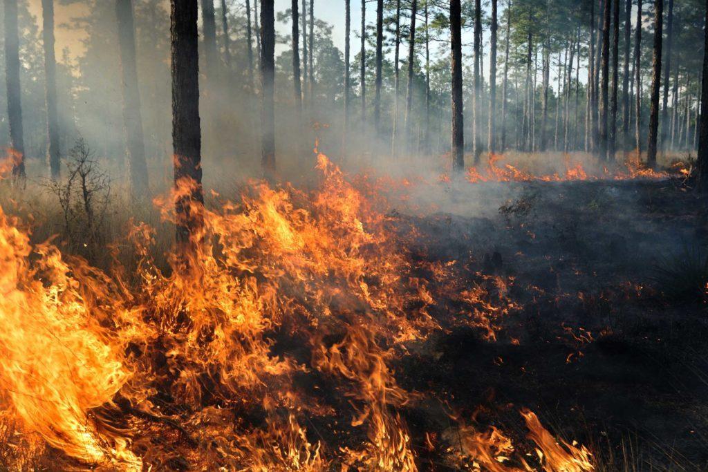 June-2017-FEA-wildfire-burn-PetepattavinaGetty-Images