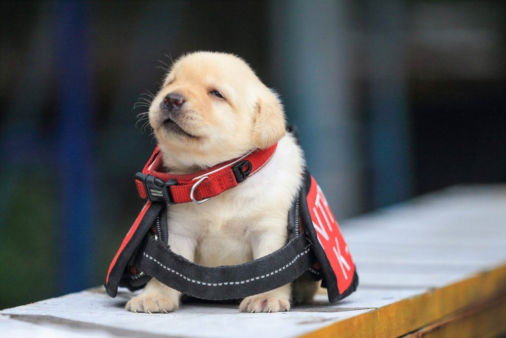 01-These-Photos-of-the-World's-Cutest-K-9-Team-Will-Make-You-Want-One,-Too