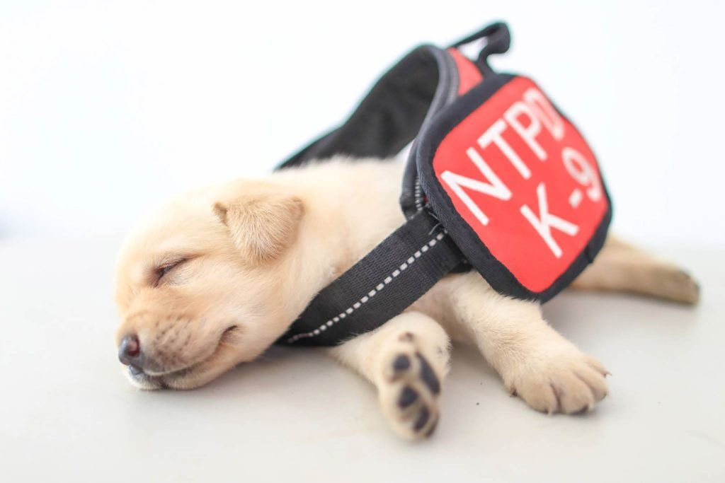 06-These-Photos-of-the-World's-Cutest-K-9-Team-Will-Make-You-Want-One,-Too