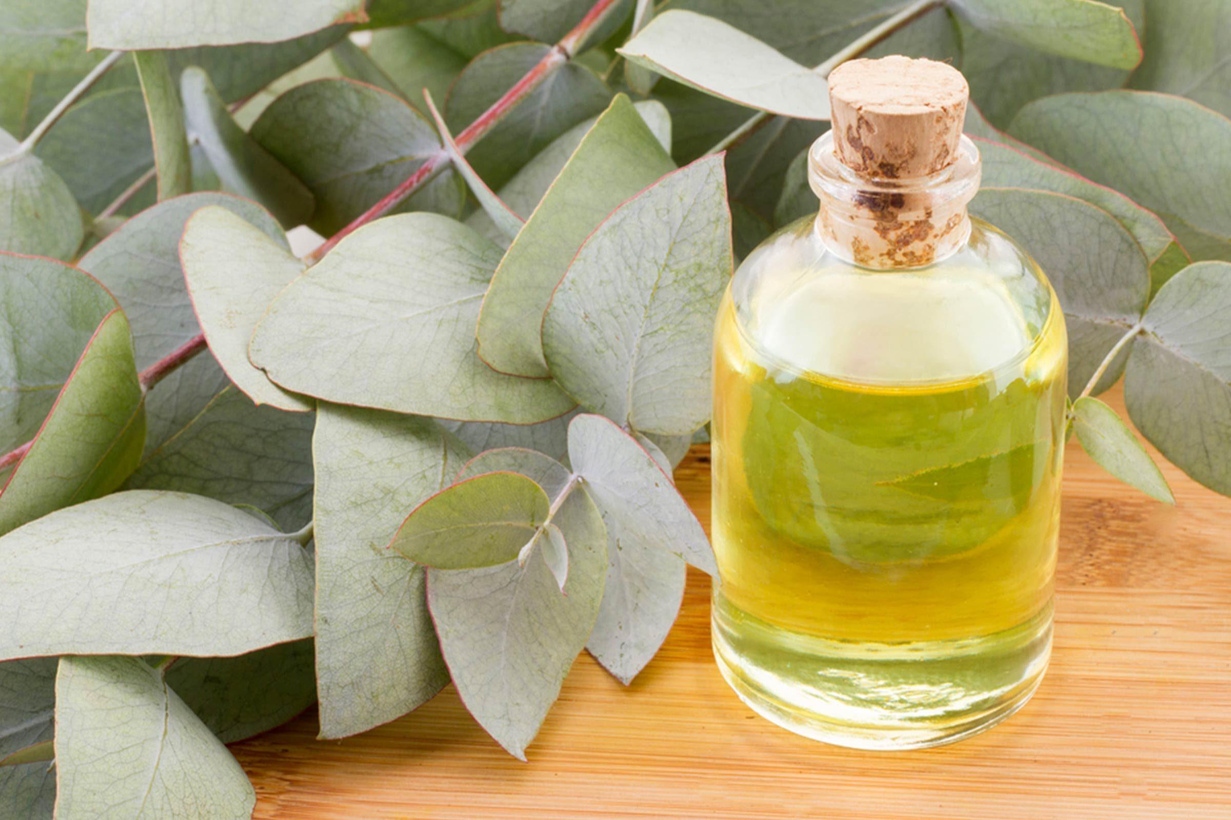 Huiles essentielles: Eucalyptus guérira le rhume et la grippe
