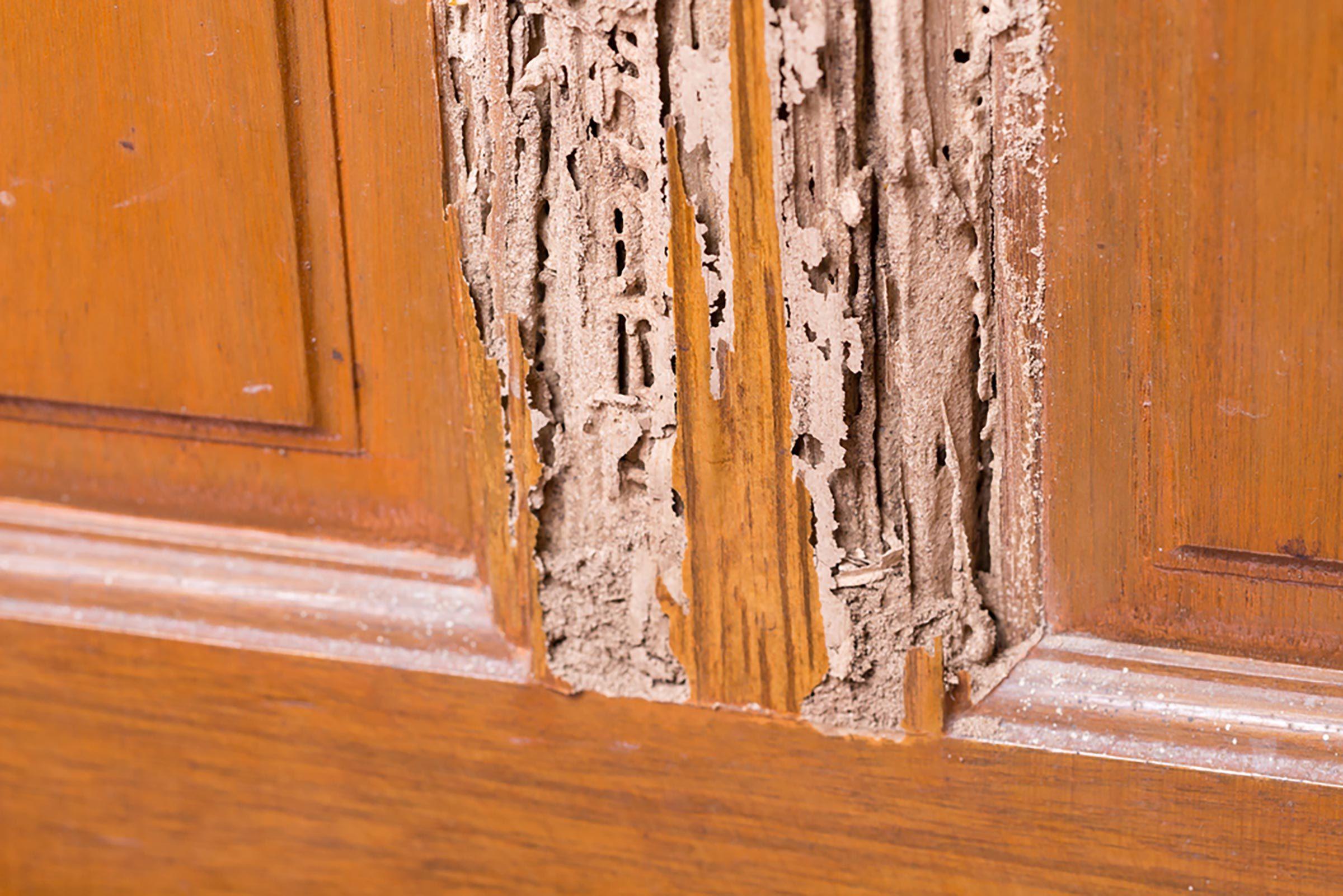 Du bois mou pourrait trahir la présence de termites