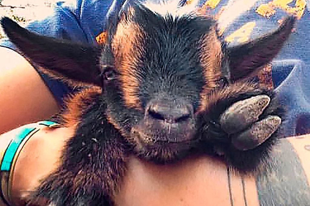 01-The-Story-of-This-Adorable-Baby-Goats-Fight-For-Life-Will-Make-Your-Day-Courtesy-Tara-Dickinson-Country-Extra