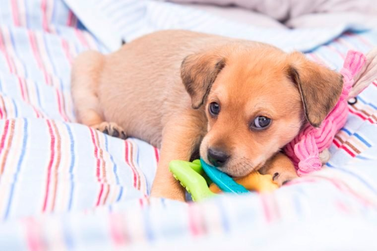 12-fur-baby-Reasons That Married Couples Should Sleep in Separate Beds_429470683-Anna-Hoychuk