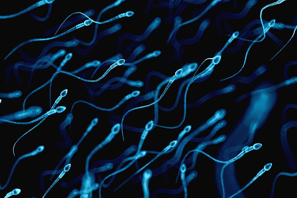 Sperm-Counts-Have-Dropped-50-Percent-in-40-Years—Here's-Why-319477037-Sebastian-Kaulitzki