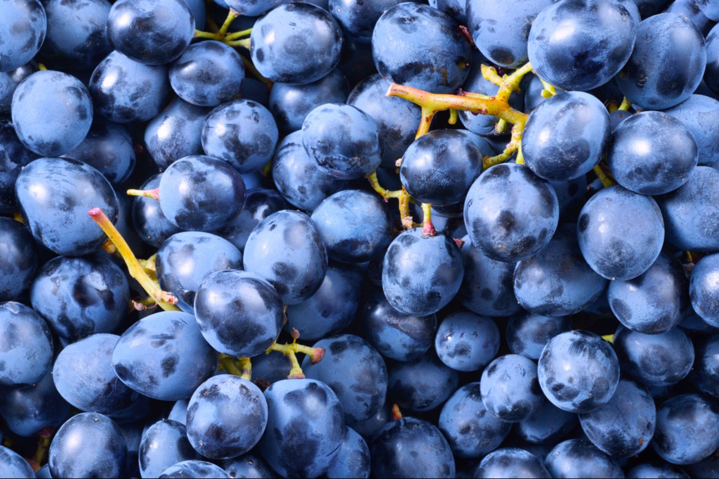 Fruits et légumes de saison: les raisins