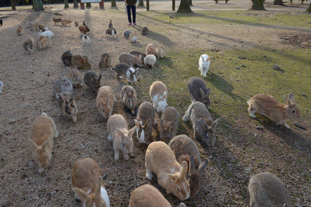 lots-of-bunnies